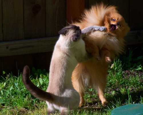 cat-dog-fight.jpg
